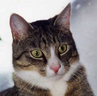 Berniecat